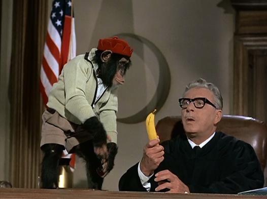 monkeysunclejudge