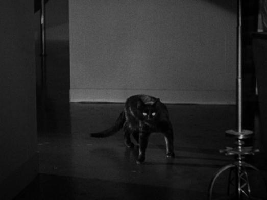 blackcat193413