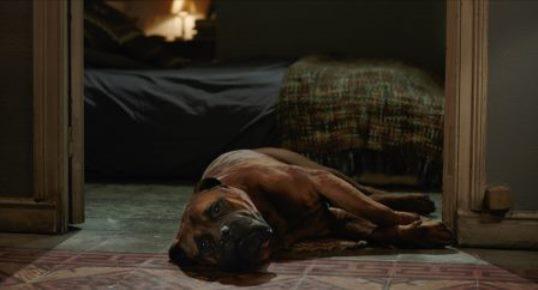 Truman-le-chien