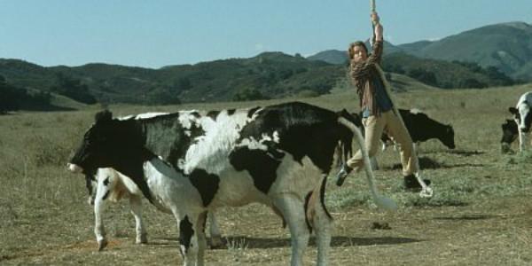 Rat-Race-Cow-Scene-600x300
